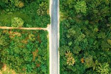 Free Bird S-eye View Photography Of Road Between Trees Stock Image - 132106671