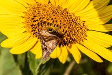Free Honey Bee, Flower, Bee, Yellow Royalty Free Stock Photo - 132187235
