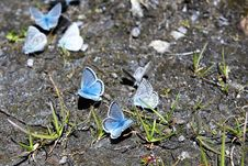 Free Plant, Leaf, Moths And Butterflies, Flora Stock Photography - 132187292