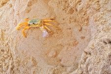 Free Crab, Decapoda, Sand, Crustacean Stock Photo - 132187600