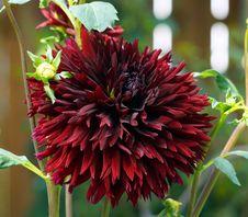 Free Flower, Plant, Flowering Plant, Blanket Flowers Royalty Free Stock Images - 132187759