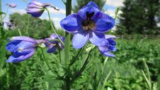 Free Flower, Plant, Flora, Flowering Plant Royalty Free Stock Image - 132187906