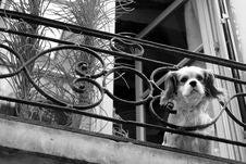 Free Black And White, Dog, Mammal, Dog Like Mammal Stock Image - 132188661