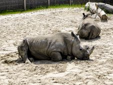 Free Rhinoceros, Terrestrial Animal, Fauna, Zoo Stock Images - 132188854
