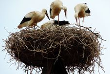 Free Nest, Bird Nest, Bird, Stork Stock Image - 132188911