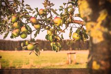 Free Tree, Fruit Tree, Fruit, Citrus Stock Image - 132189151