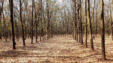 Free Woodland, Ecosystem, Tree, Grove Stock Image - 132189301