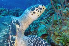 Free Sea Turtle, Ecosystem, Turtle, Coral Reef Royalty Free Stock Images - 132189329