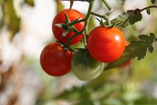 Free Natural Foods, Fruit, Tomato, Potato And Tomato Genus Stock Photo - 132189380