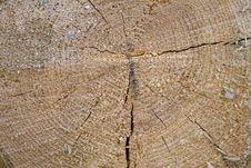 Free Wood, Geology, Soil, Fault Royalty Free Stock Photography - 132189617