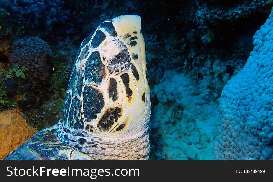 Turtle, Sea Turtle, Marine Biology, Ecosystem