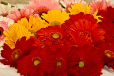 Free Colorful Gerberas Stock Image - 13226491