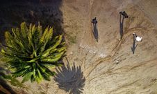 Free Aerial Photography Of Green Palm Tree Royalty Free Stock Images - 132219319