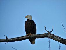 Free Bird, Eagle, Bird Of Prey, Bald Eagle Royalty Free Stock Photos - 132273858