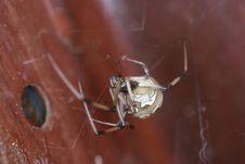 Free Spider, Arachnid, Invertebrate, Arthropod Stock Images - 132274054