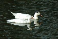 Free Bird, Duck, Water Bird, Water Stock Photo - 132274250
