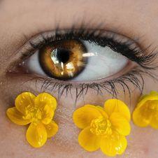 Free Yellow, Eye, Eyelash, Close Up Royalty Free Stock Photography - 132274347