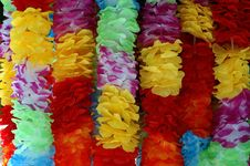 Free Petal, Lei, Cut Flowers, Flower Royalty Free Stock Photo - 132274615