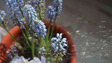 Free Plant, Flower, Flora, Spring Royalty Free Stock Photos - 132274838