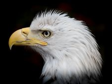 Free Beak, Bird Of Prey, Eagle, Bird Royalty Free Stock Images - 132274859