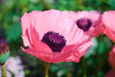 Free Flower, Pink, Flowering Plant, Wildflower Stock Photography - 132274932