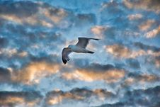 Free Sky, Bird, Cloud, Flight Royalty Free Stock Photos - 132275228
