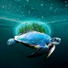 Free Sea Turtle, Loggerhead, Water, Turtle Royalty Free Stock Images - 132275279