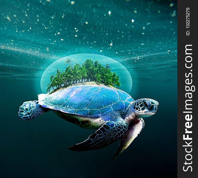 Sea Turtle, Loggerhead, Water, Turtle