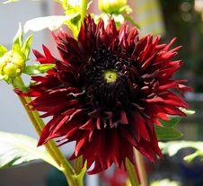 Free Flower, Plant, Flowering Plant, Blanket Flowers Stock Photo - 132351620