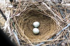 Free Nest, Bird Nest, Egg, Beak Royalty Free Stock Images - 132351789