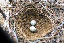 Free Nest, Bird Nest, Egg, Beak Royalty Free Stock Images - 132351789