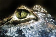Free Close-Up Photo Of Crocodile Eye Stock Photography - 132385872