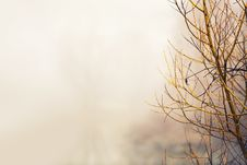 Free Close-Up Photo Of Bare Tree Royalty Free Stock Images - 132568229