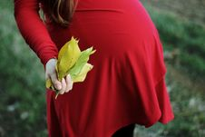 Free Selective Focus Photography Of Pregnant Woman Holding Bundle Of Leaves Stock Photos - 132568363