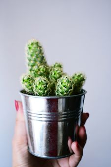 Free Person Holding Gray Flower Pot With Cactus Stock Photo - 132568390