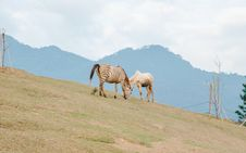 Free Two Brown Zebra On Green Grass Field Stock Image - 132568391