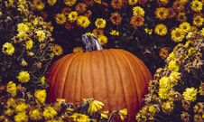 Free Photo Of Pumpkin Surrounded By Flowers Stock Photography - 132568442