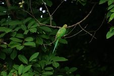 Free Green Bird Perched On Tree Branch Stock Photography - 132670692