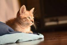 Free Close-Up Photo Of Orange Tabby Cat Royalty Free Stock Photo - 132670785