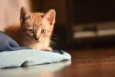 Free Close-Up Photo Of Orange Tabby Cat Stock Images - 132670844