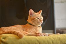 Free Orange Cat On Top Of Yellow Textile Stock Image - 132670911