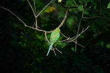 Free Green Bird On Brown Tree Branch Royalty Free Stock Images - 132761089