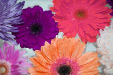Free Assorted-color Daisy Flowers In Bloom Stock Photography - 132761162