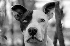 Free Dog, Black, Dog Breed, Black And White Stock Images - 132765824
