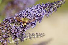 Free Lilac, Lavender, Purple, English Lavender Stock Photos - 132766143