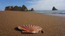 Free Seashell, Sea, Shore, Sand Stock Photography - 132766382