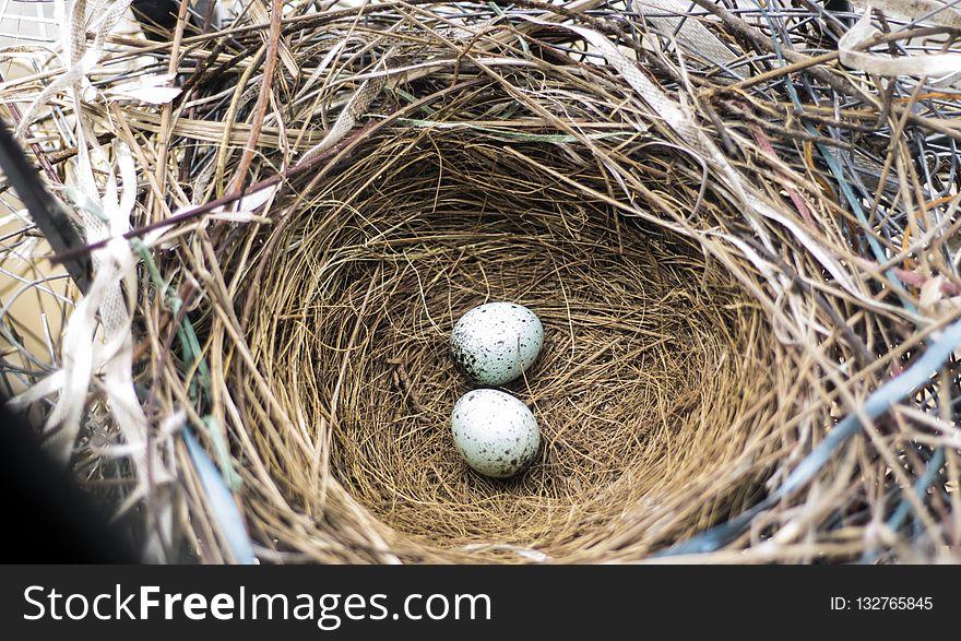 Nest, Bird Nest, Egg, Beak