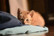 Free Orange Tabby Kitten Reclining On Floor Royalty Free Stock Photo - 132859455