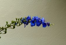 Free Blue, Flower, Cobalt Blue, Flora Royalty Free Stock Photos - 132860938