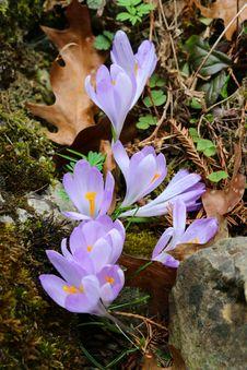Free Flower, Plant, Flowering Plant, Flora Royalty Free Stock Photo - 132861105